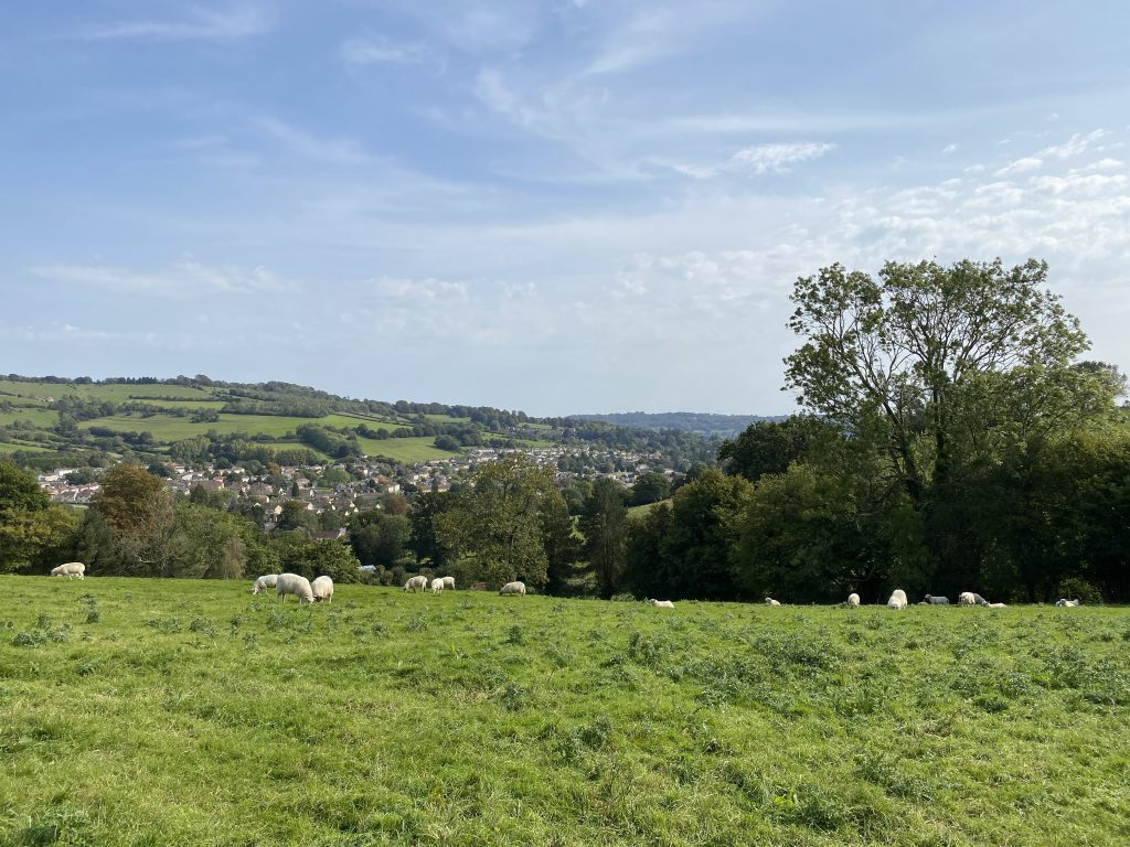 Photo with sheep Weston Short Circular Walk